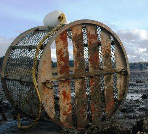 oyster farming on Willapa Bay